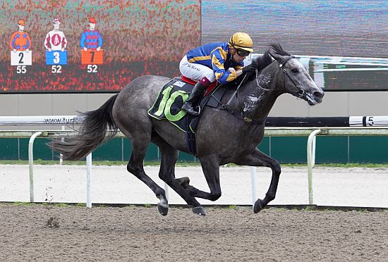 Irwan go horse betting bet on england v italy rugby